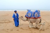 Featured Travel Photo - Camel on Croco's Beach, near Taghazout