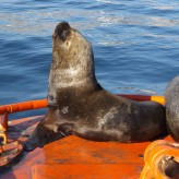 Travel journals and travel notes - Valparaíso, Chile